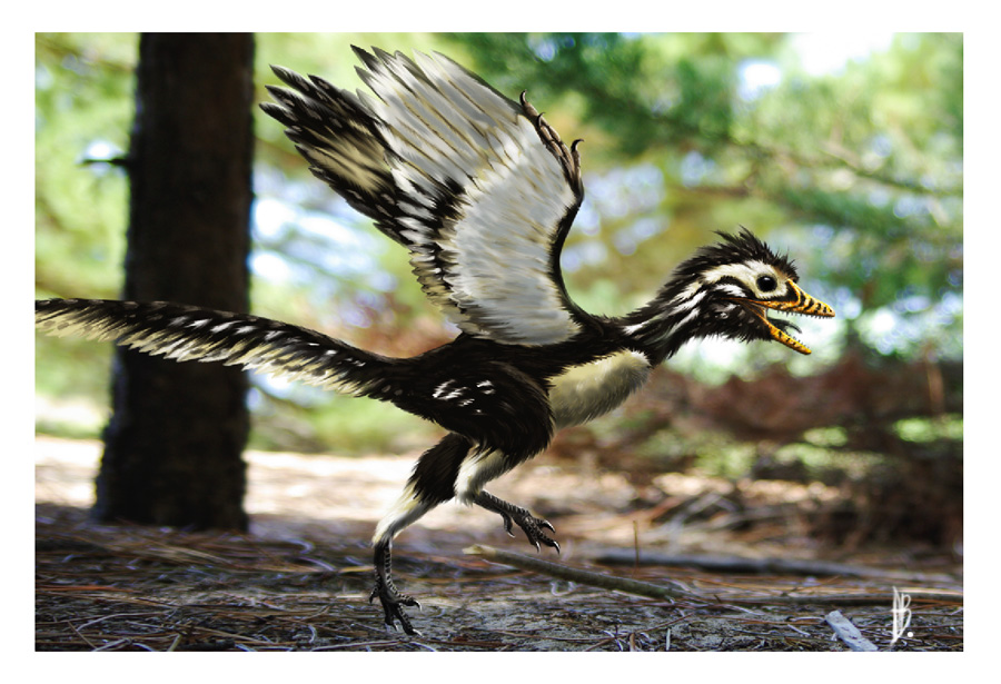 Archaeopteryx_lithographica_by_dustdevil