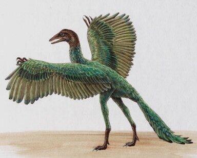 archaeopteryx_
